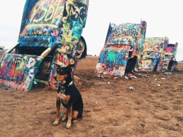 Snickers at Cadillac Ranch