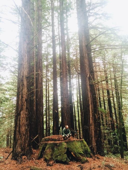 Matt and Snickers Redwood