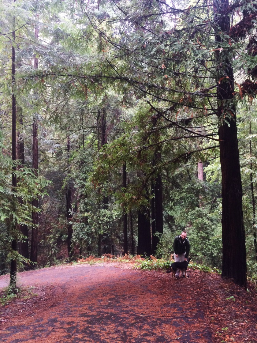 Henry Cowell park1