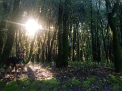 Henry Cowell park2