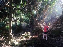 Jungle on the Kalalau Trail