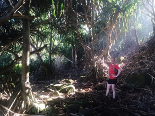 Jungle on the Kalalau Trail