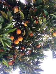 California Oranges