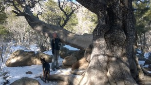 Hiking in Flagstaff, AZ