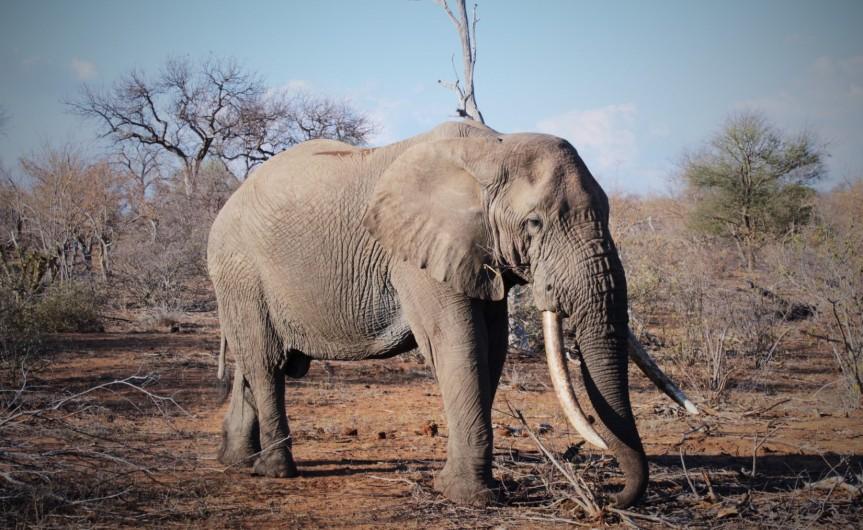 African Safari Vacation – EzulwiniLodges