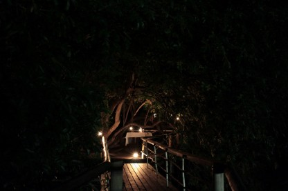 Entrance to the honeymoon dinner in the trees