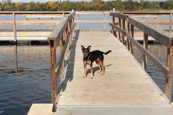 Snickers at Lake Hiawatha