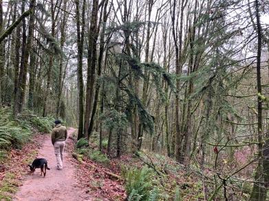 Forest Park - Portland, OR