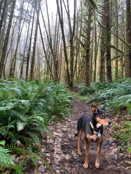 Kings Mountain - Tillamook Forest