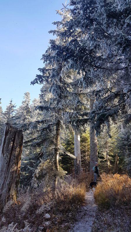 Bald Mountain Trail - OR