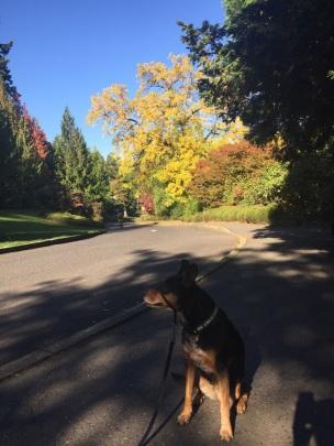 Washington Park - Portland, OR