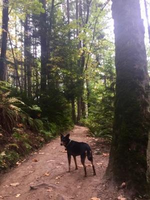 Marquam Trail - Portland, OR