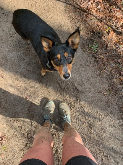 Muddy runs in Forest Park